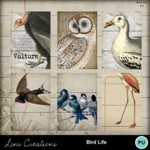 birdlife3